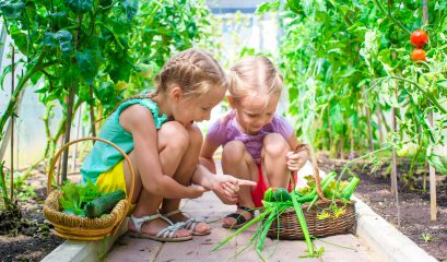 Adorable,little,girls,collecting,crop,cucumbers,and,tomatoes,in,greenhouse